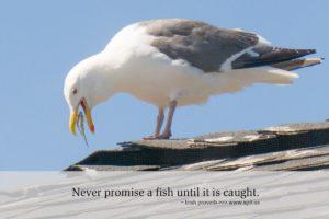 xp3-dot-us_DSC_9017_promise-a-fish (Never Promise A Fish Until…)