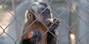 xp3-dot-us__DSC2299_monkey (The Most Difficult Risk)
